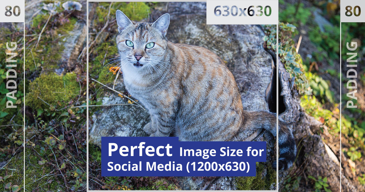 Perfect Image Size for Social Media • Russwurm